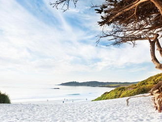 carmel_beach_cypress_tree_cropped.jpg