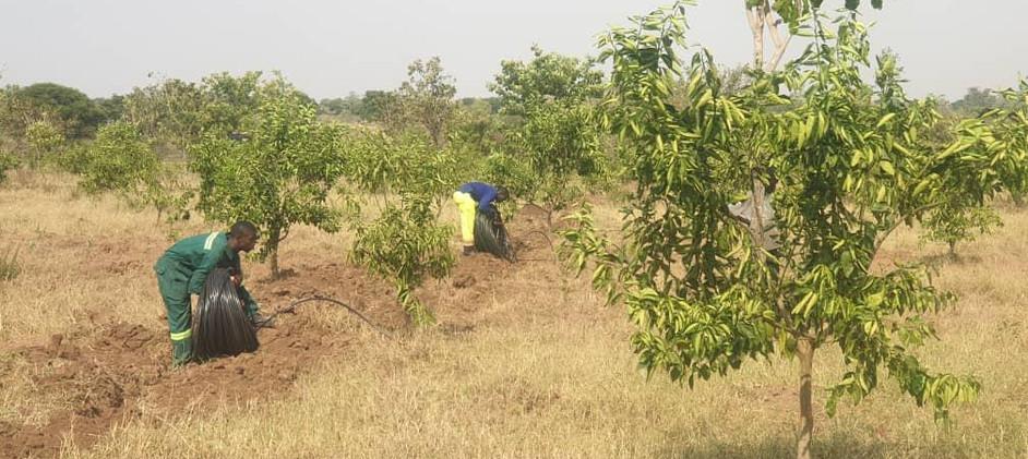 Akumangor drip irrigation install 4.jpg