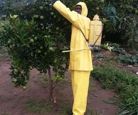 Inv 392 Onguoti Orchard protection.JPG