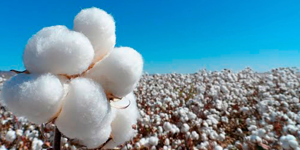 I Jornada de Temas Selectos del Cultivo del Algodón en México