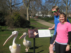 Joggers and pelicans in London park