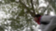 Action picture of runner with trees