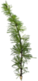 The first tree branch image in Ardena's timeline