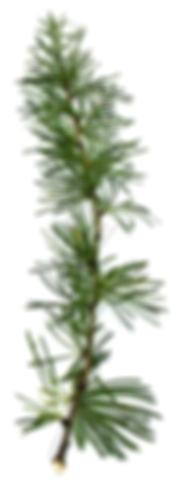 The last tree branch image in Ardena's timeline
