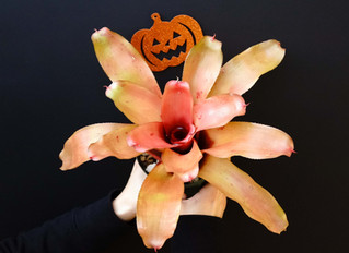 Happy Halloween~~!