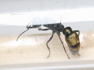 New Ant & New Ant Fern / Plants