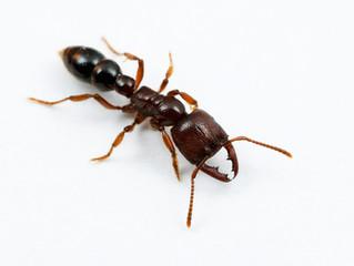 アリの入荷時期