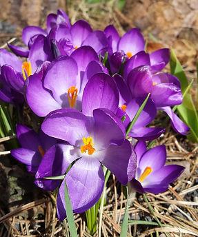 Frühling Bollmannsruh