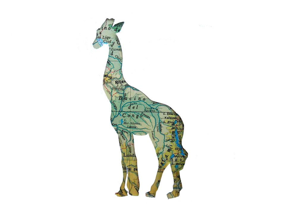 Giraffa/Africa