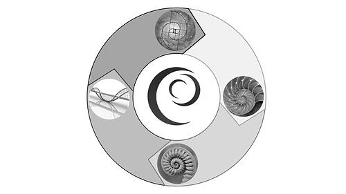 EscModel 2.png