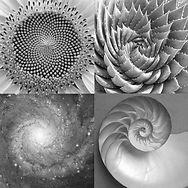 fibonacciNatureFinal.jpg