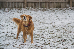 Keep Your Dog Safe and Happy with These 6 Winter Tips