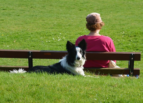 How Companion Animals Can Help Improve Your Mental Health