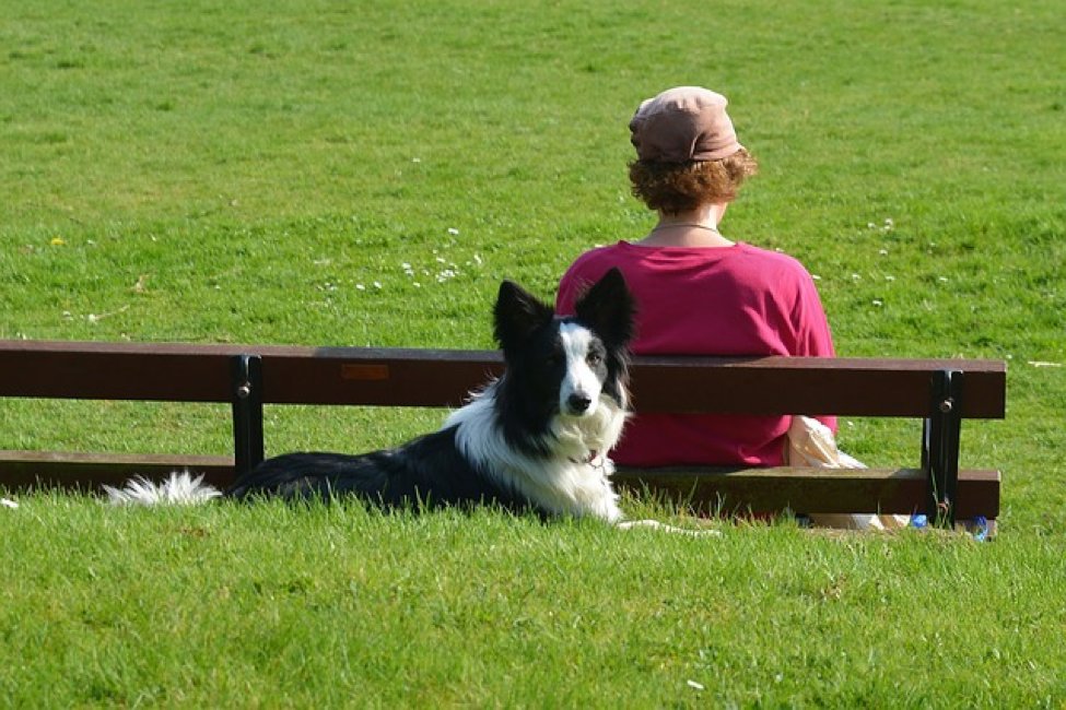 companion animals can help improve your mental health