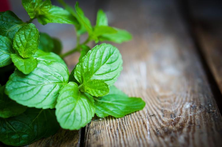 Peppermint Leaf.jpg