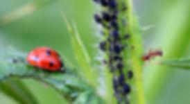 nature-grass-photography-flower-green-re