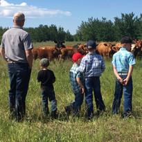 Herd tours