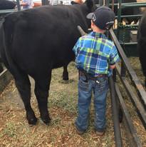 Hawkin blowing off his heifer