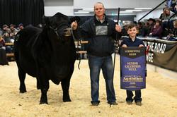 Champion Senior Bull