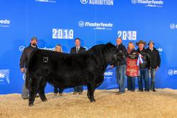 Reserve Champion Bull