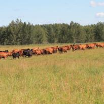 Pasture gathering