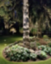 up-tree.jpg