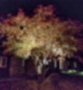 downtree.jpg