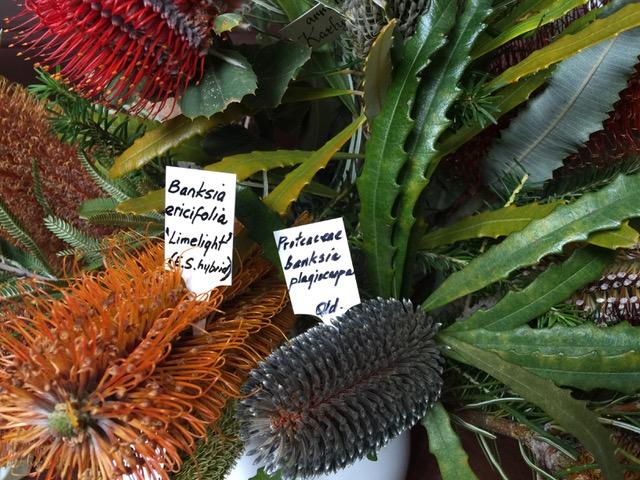 Albany Wildflower Show
