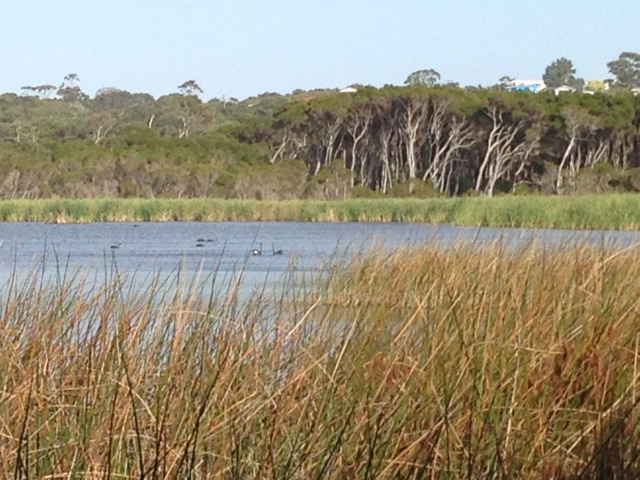 Lake Seppings Bird Walk