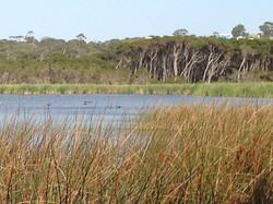 Lake Seppings Bird Walk