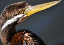 Albany Bird Group