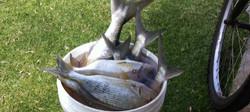 Fish bucket List