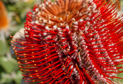 Wildflower Botanic Gardens