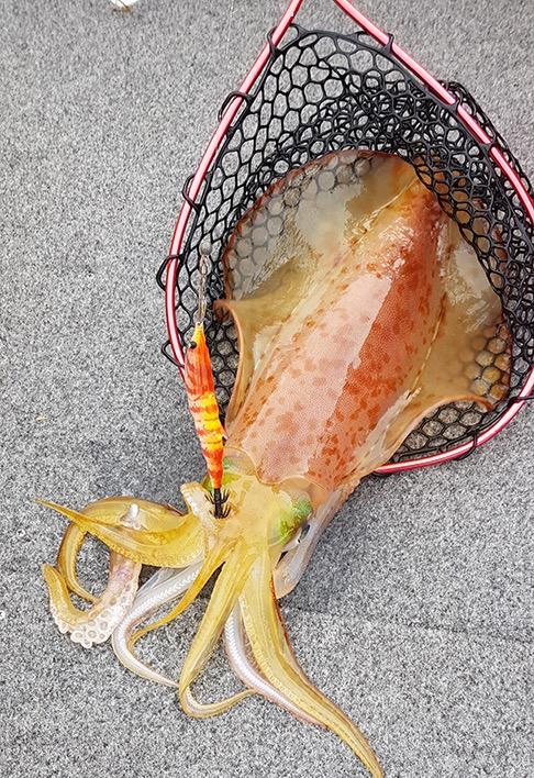 Freshly Caught Squid