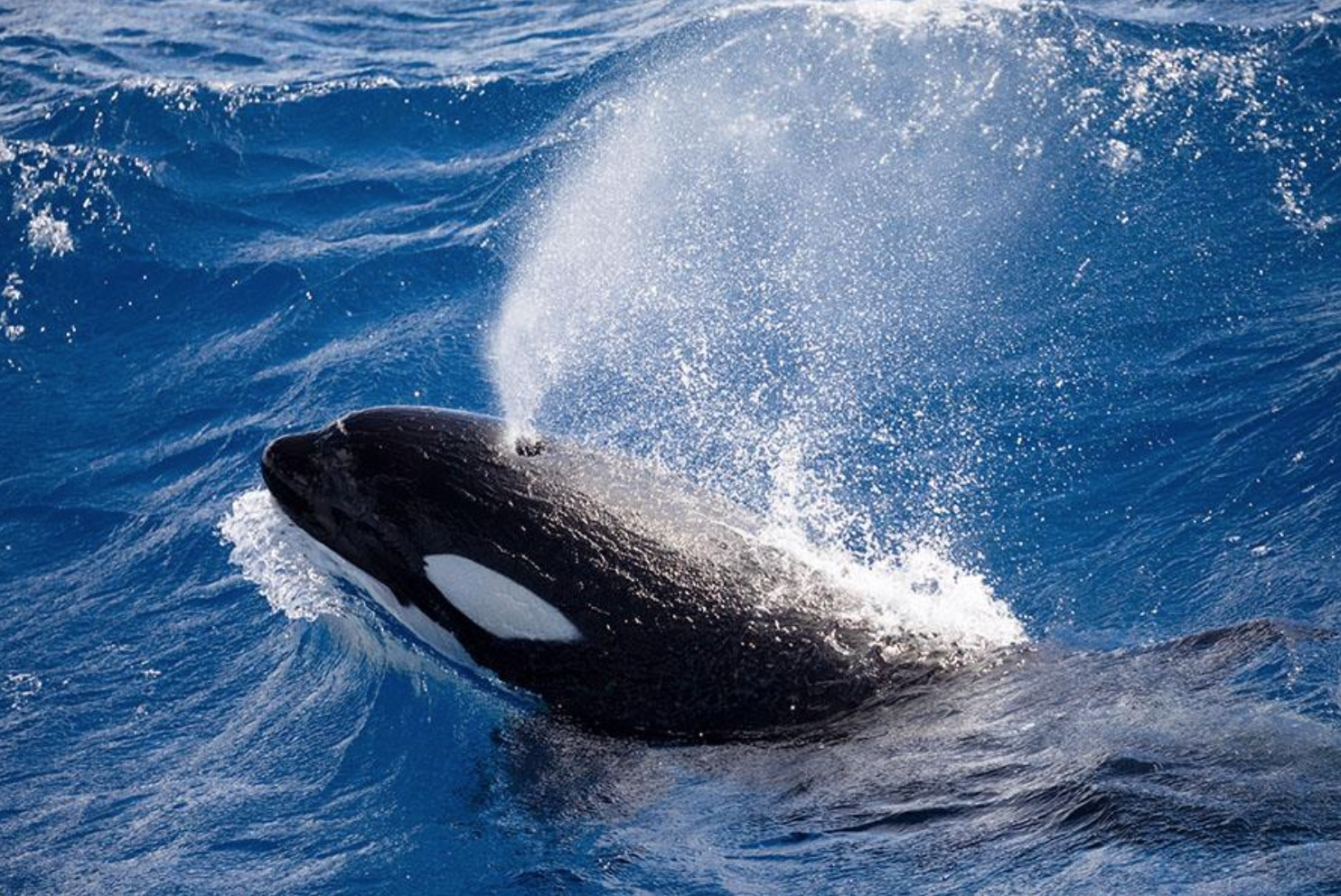 Killer Whale Expedition
