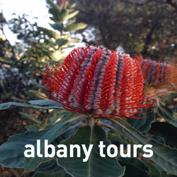 LOCAL ALBANY TOURS