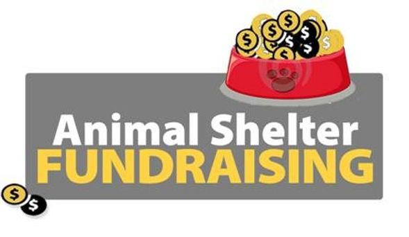 animal shelter_edited.jpg