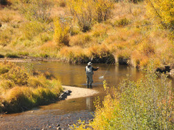 fly fisher surrounded by gold leaves