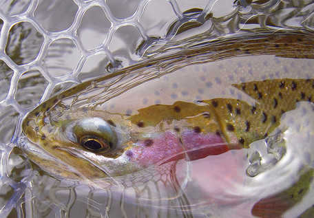 the-estes-angler-is-here.jpg
