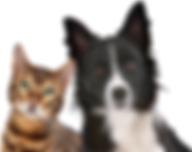 Pet health Club.png