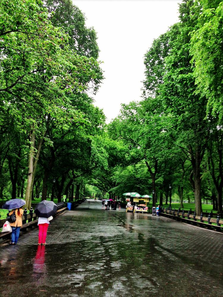 Umbrellas of Central Park