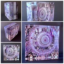 Cactus in the Round Plexiglass Cube