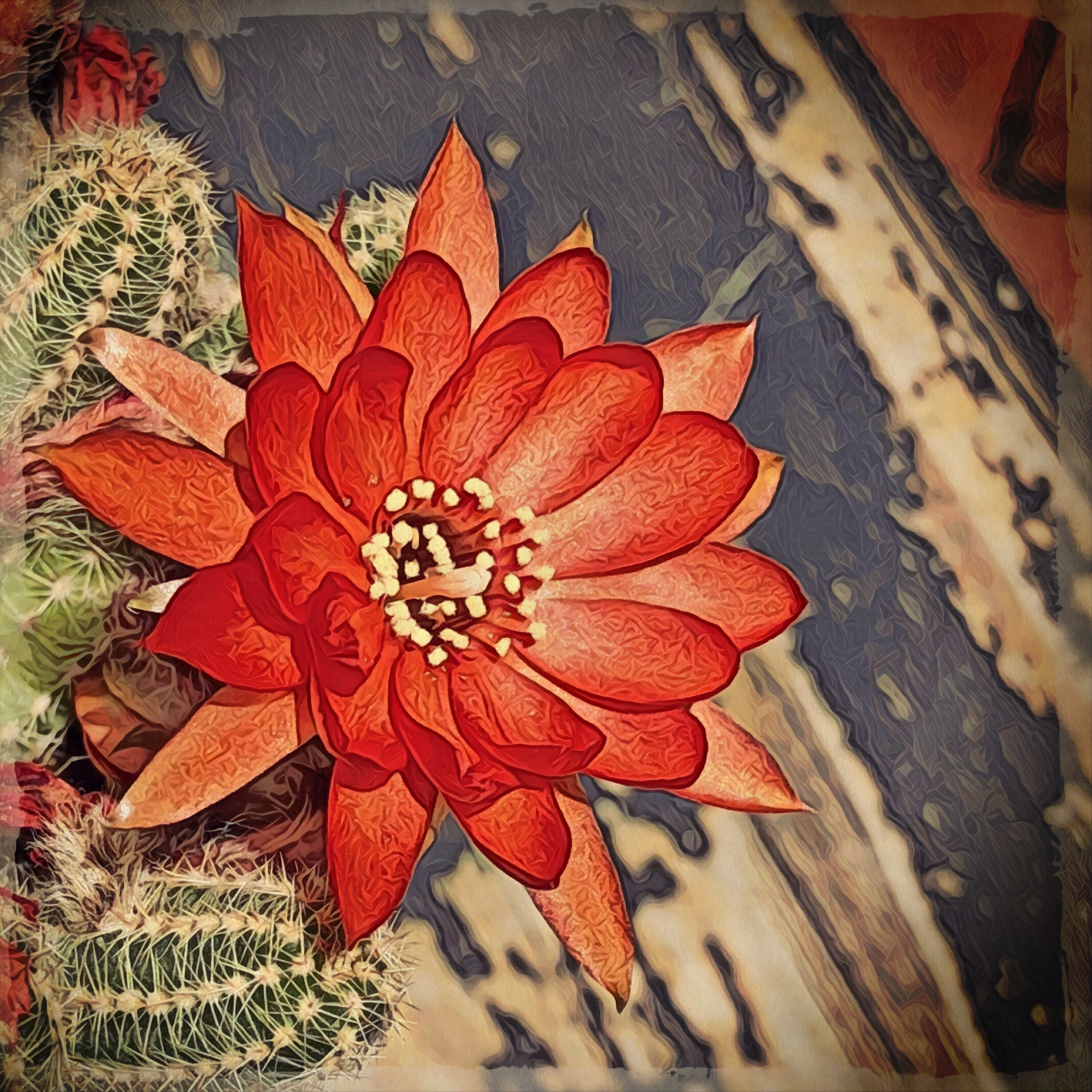 Red Cactus Flower