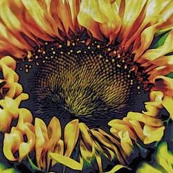 Cracked Court Sunflower