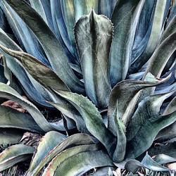 Sexy Succulent