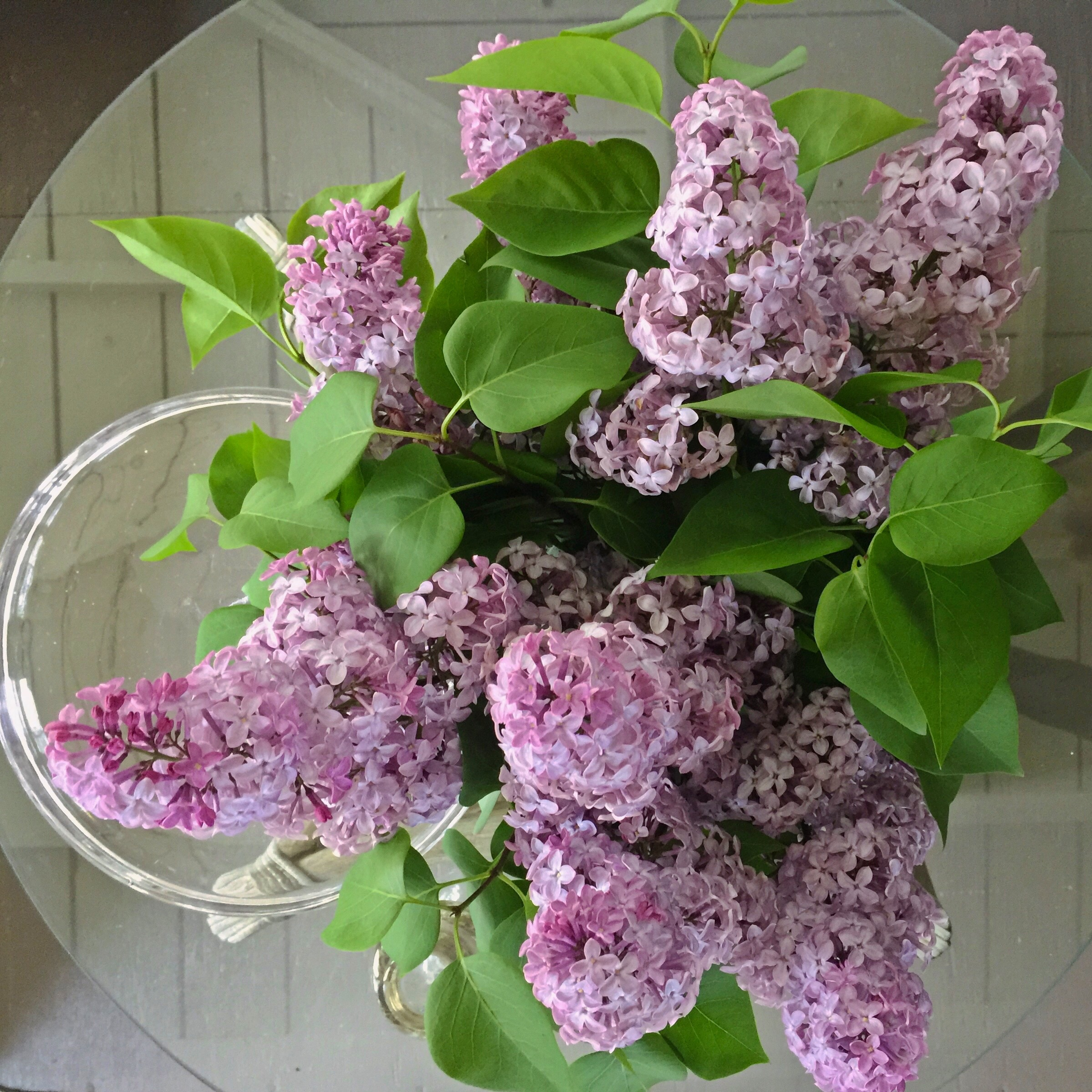 Michigan Lilacs