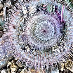 Cactus in the Round