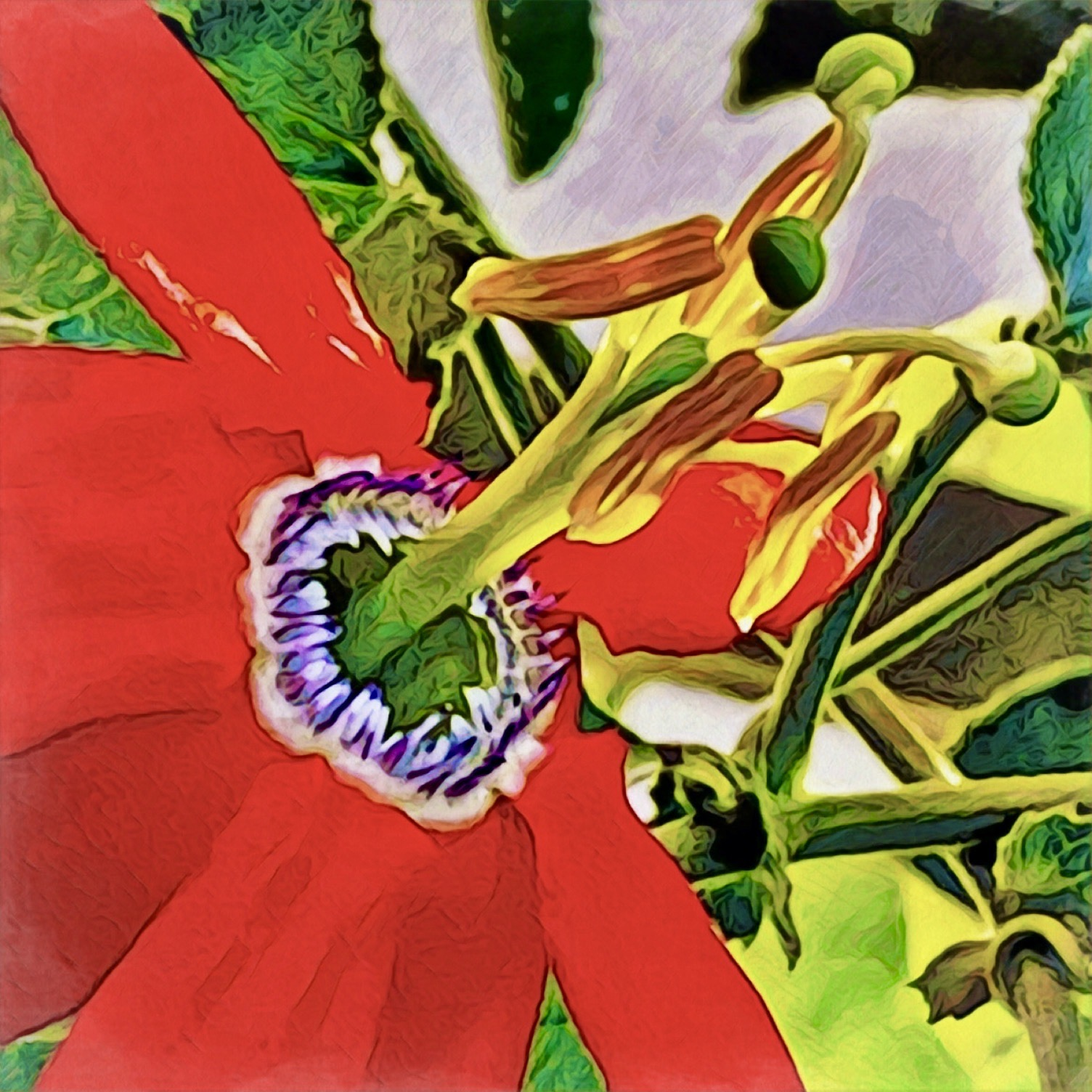 Red Passion (Flower)