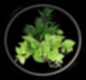 Plants, Potted Plants, Bundaberg Flowers,