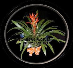 Flowers Bundaberg, Bromelias, Plants, Flowering Plants, Flowers Bundaberg,